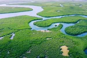 Amazon Rainforest Day - big rainforest in the world