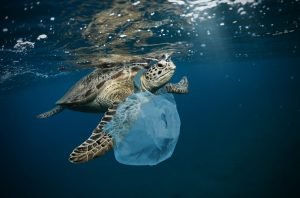 Turtle with plastic bag around its neck