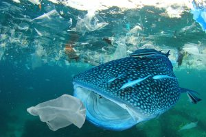 World Ocean Day Topic: plastic waste in the ocean