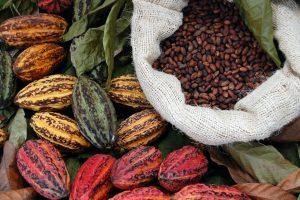 Fair Trade Cocoa with cacao
