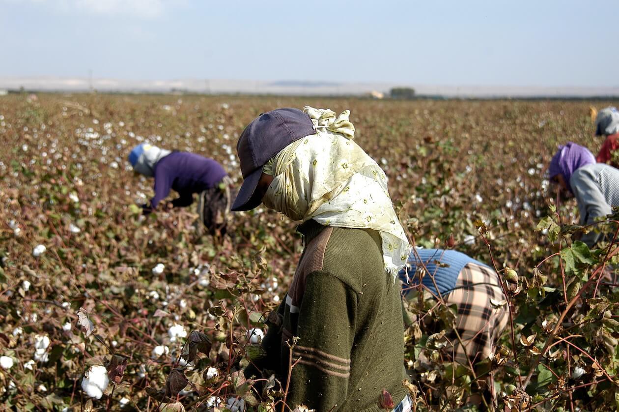 Fair Trade Cotton Farmers can benefit a lot of fair trade cotton