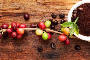 Fair Trade Fact- Coffee