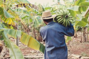 Fairtrade products make a difference for the producer like the banana farmer in the image.