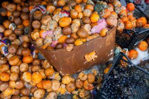 Food loss: oranges rotting away