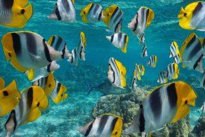 マイクロプラスチックの生態系への影響
