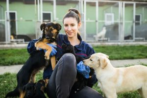 On World Animal Day, you can volunteer at animal shelters