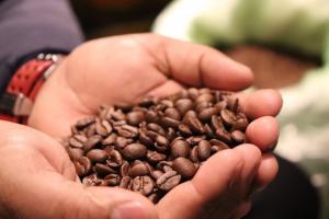 ビカスコーヒー豆、浅煎り