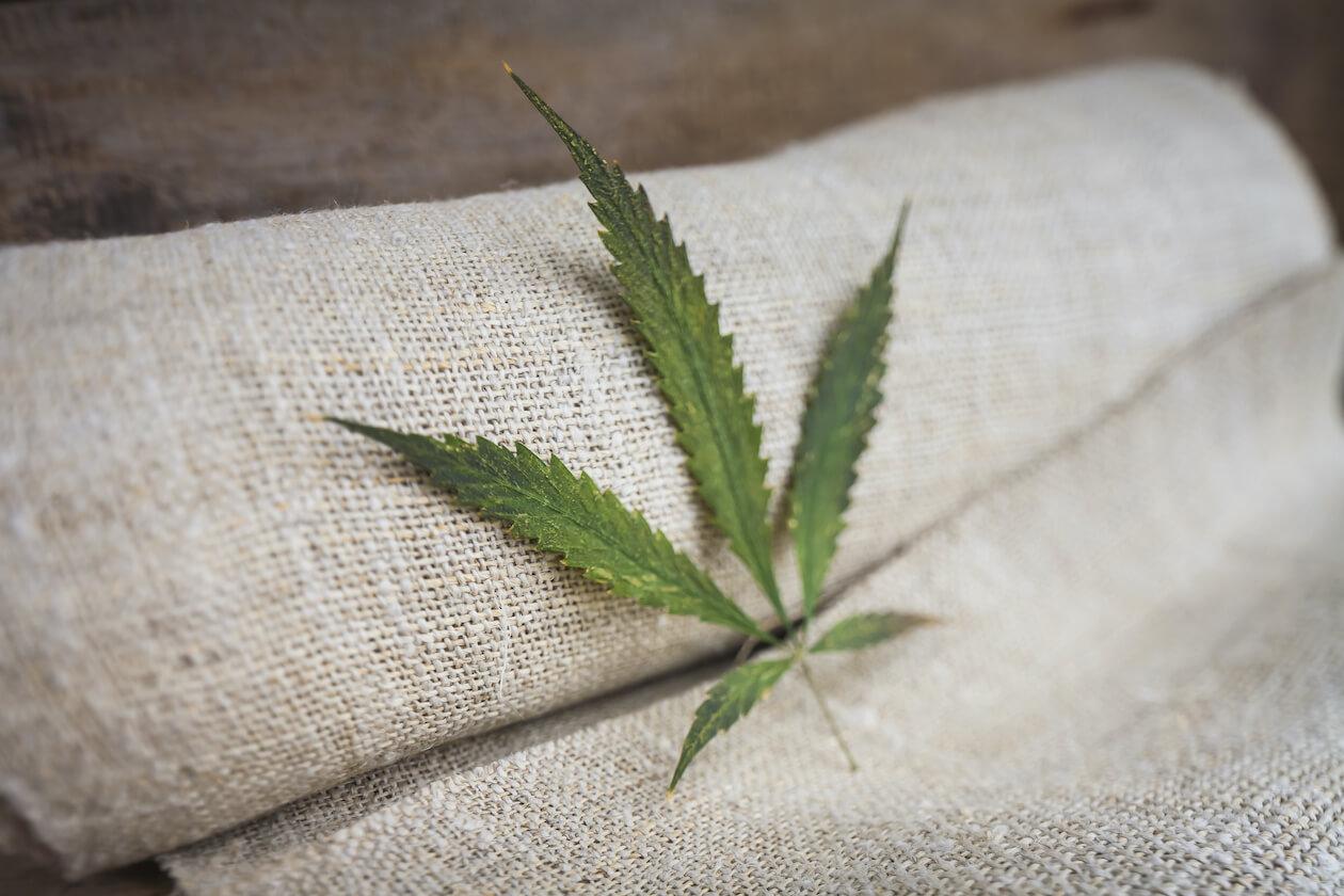 Vegan fashion: plant based cloth