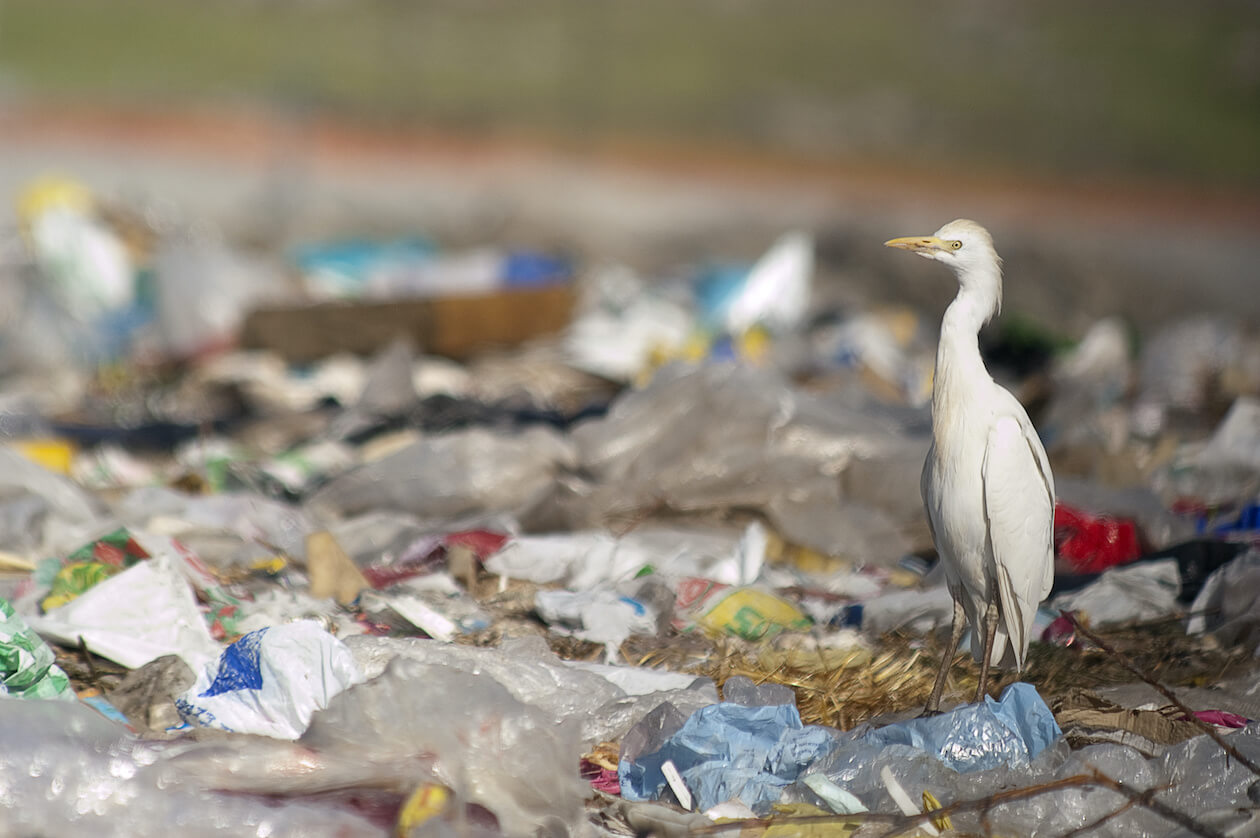 Birds in plastic pollution, effect overall animals