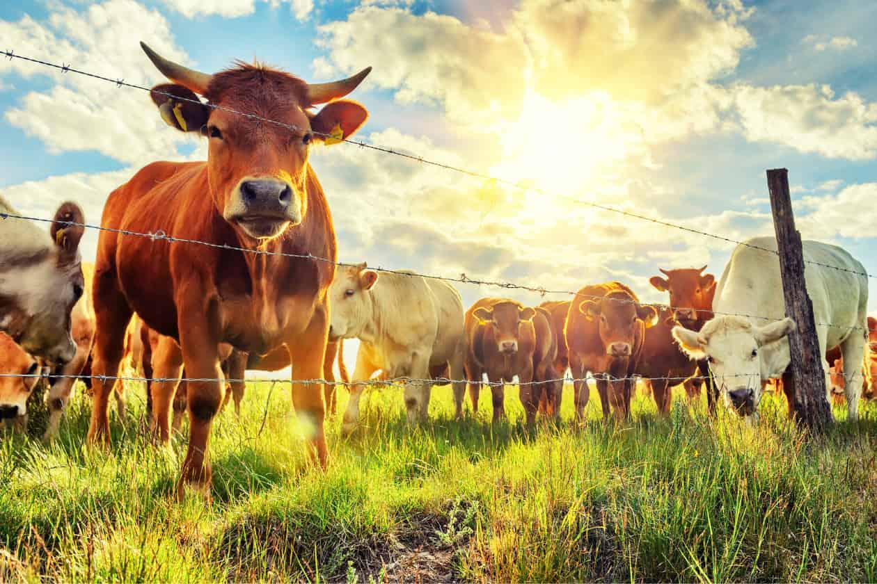 畜産が環境に与える問題