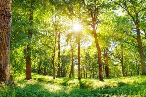 森林保護、森林伐採
