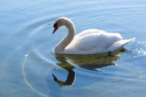 ラムサール条約で守られる湿地の生き物