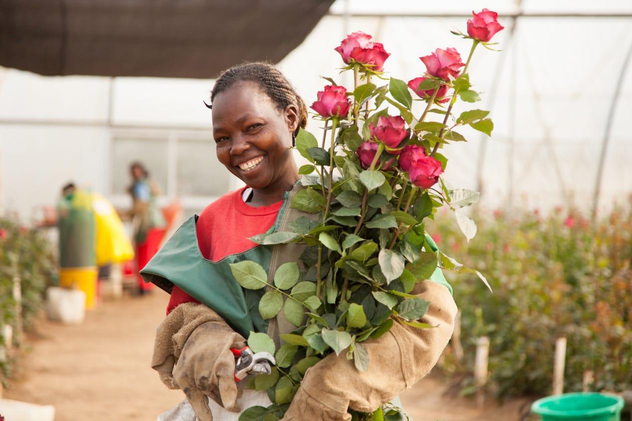 アフリカローズの花束
