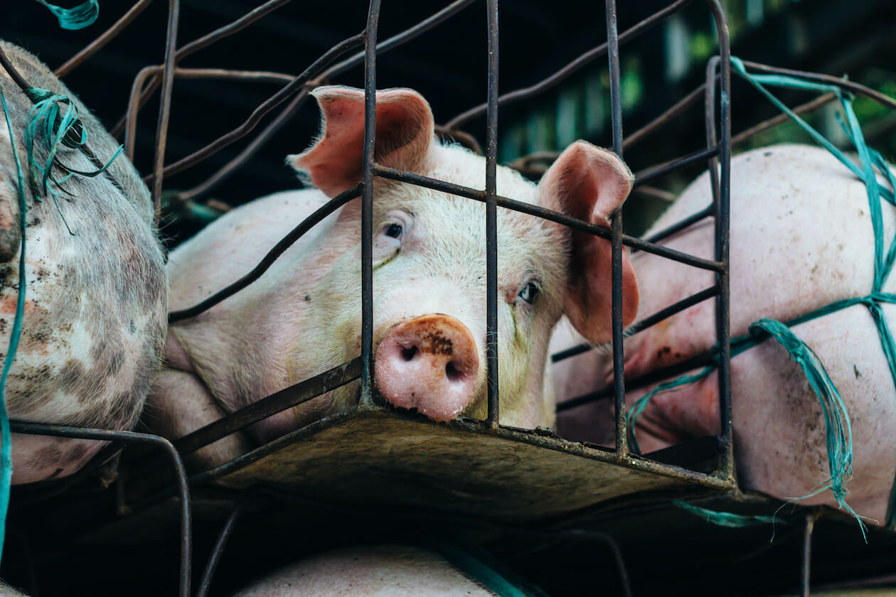 Animal welfare is more than just zoo but the food industry too.