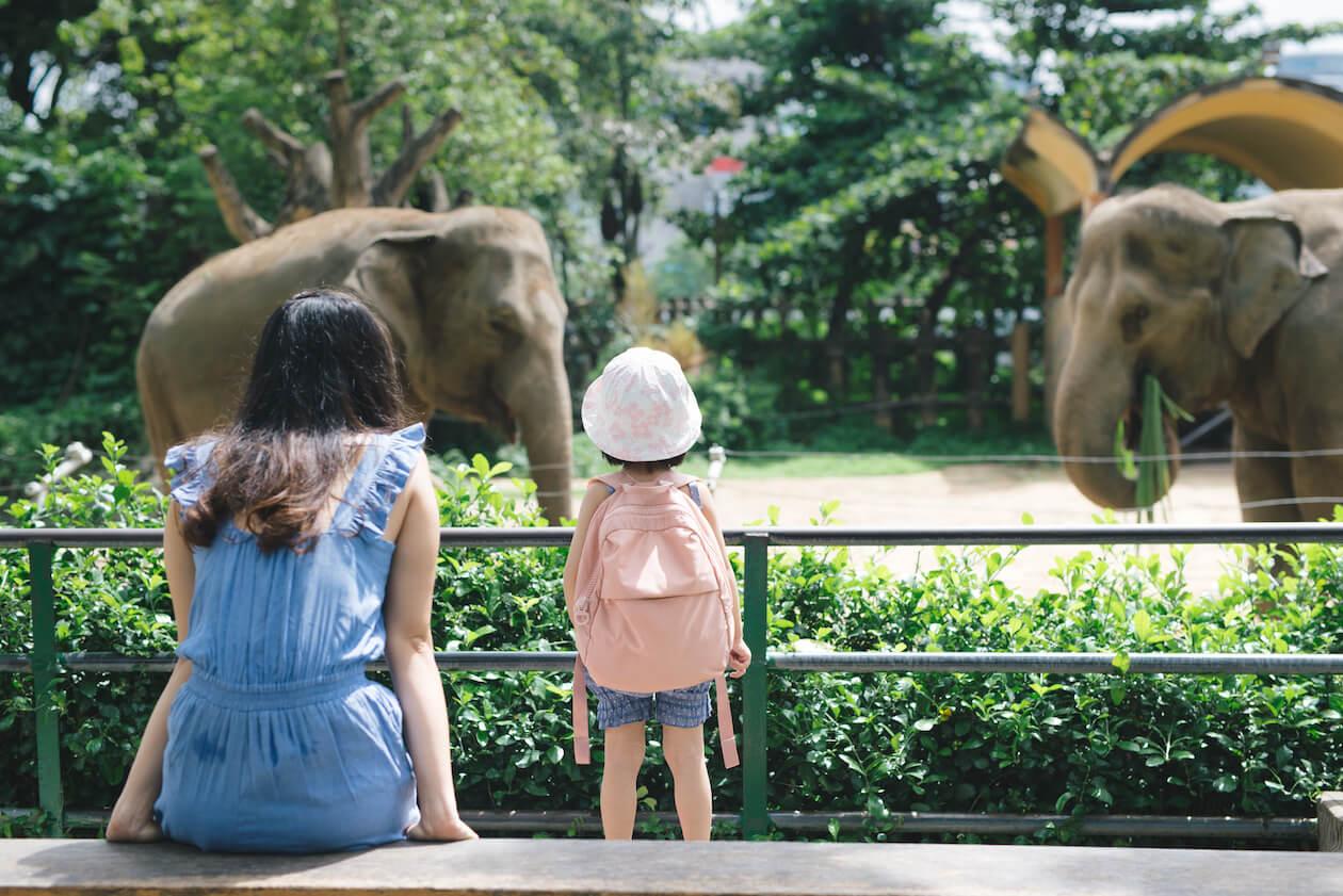 Animal welfare: zoo