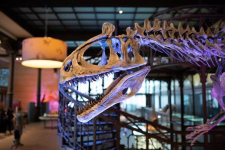 絶滅してしまった恐竜