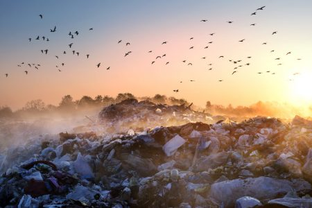 Effects of Food Waste: trash land