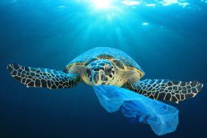 カメがプラスチックを誤嚥してしまう