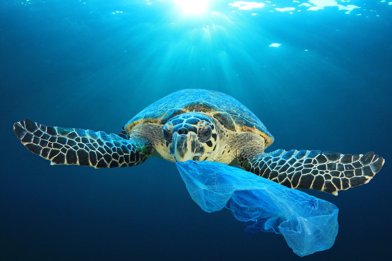 Turtle eating plastic bag pollution
