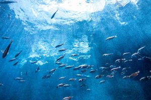 msc認証マークが守る海洋