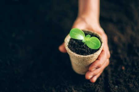 Biodegradable Products for Waste management