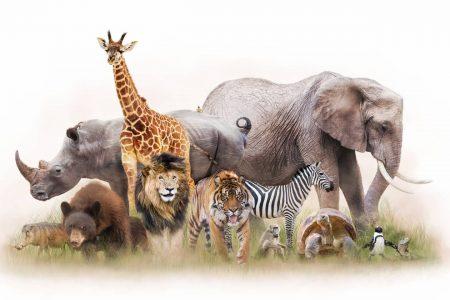 日本や世界各地にいる絶滅危惧種で身近な動物たちの写真