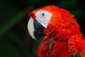 レッドリストの鳥