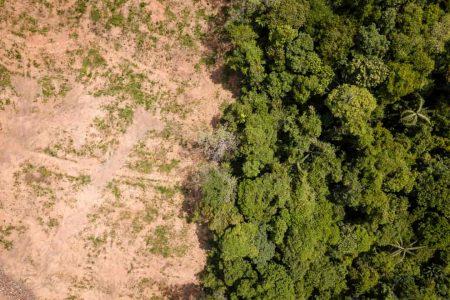 森林破壊で山の半分から森が消えた様子