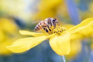 生物多様性条約が守る自然のハチ