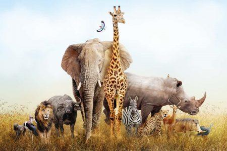 生物多様性 biodiversity