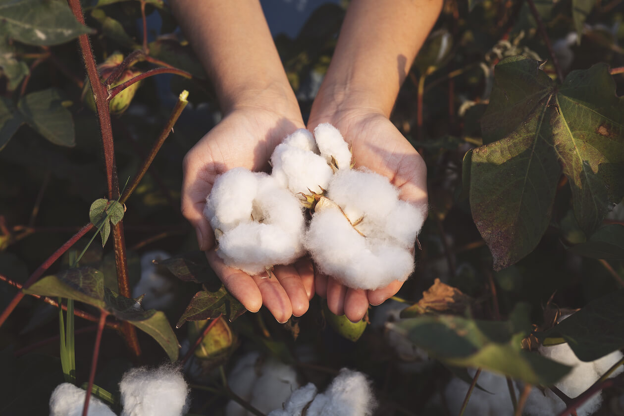 Cotton: organic or conventional