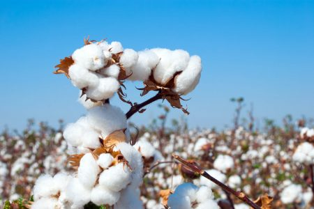 Organic cotton vs cotton breakdown