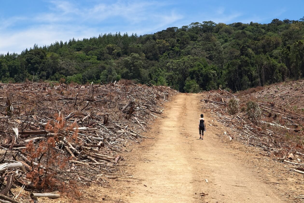 Deforestation is a huge issue, as seen in the image, destroy forest compared to the lush green forest in the background