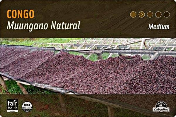 Grounds for Change's Congo Coffee farm