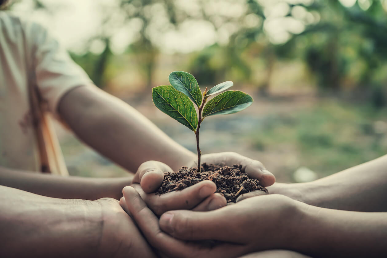 Earth Day Fun Fact: Many places plants tree on earth day