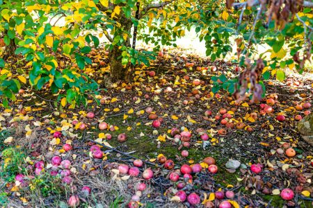 Food waste is correlated with climate change