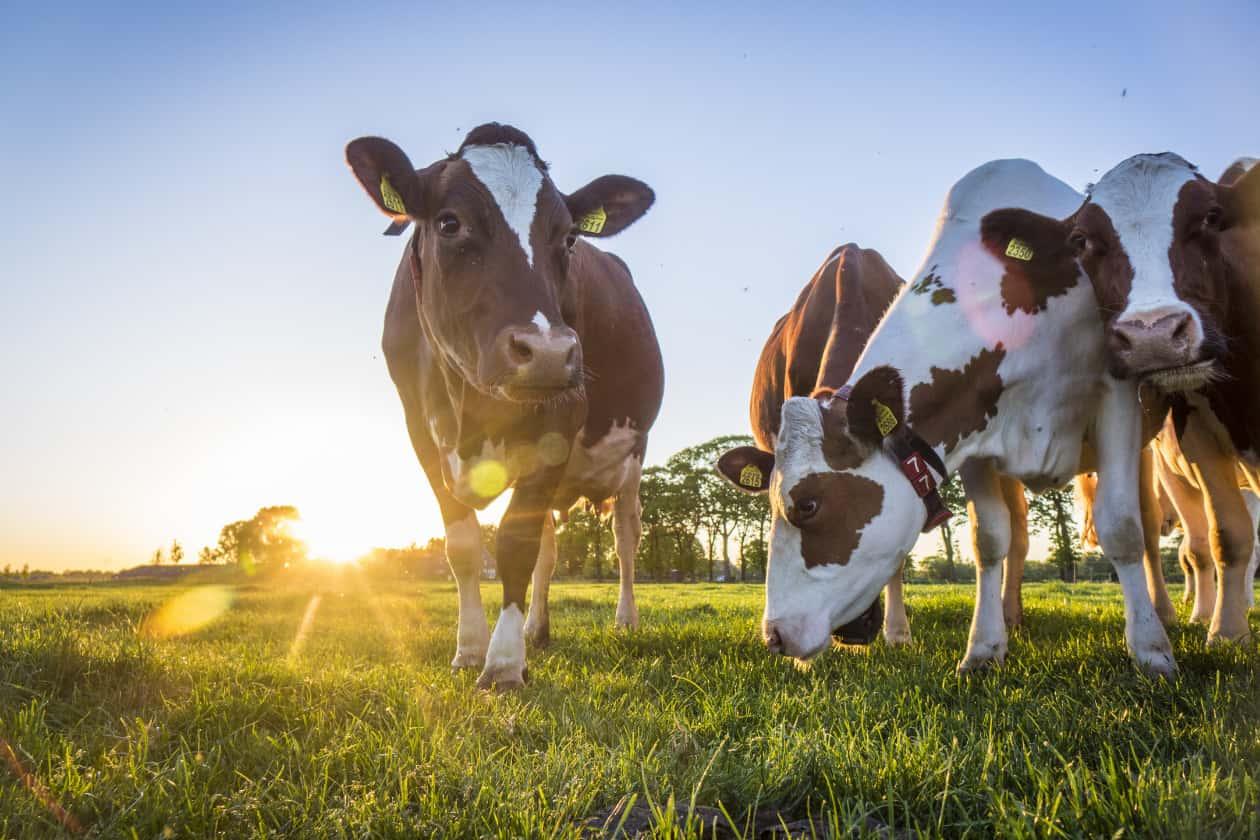 畜産によって助長される環境問題
