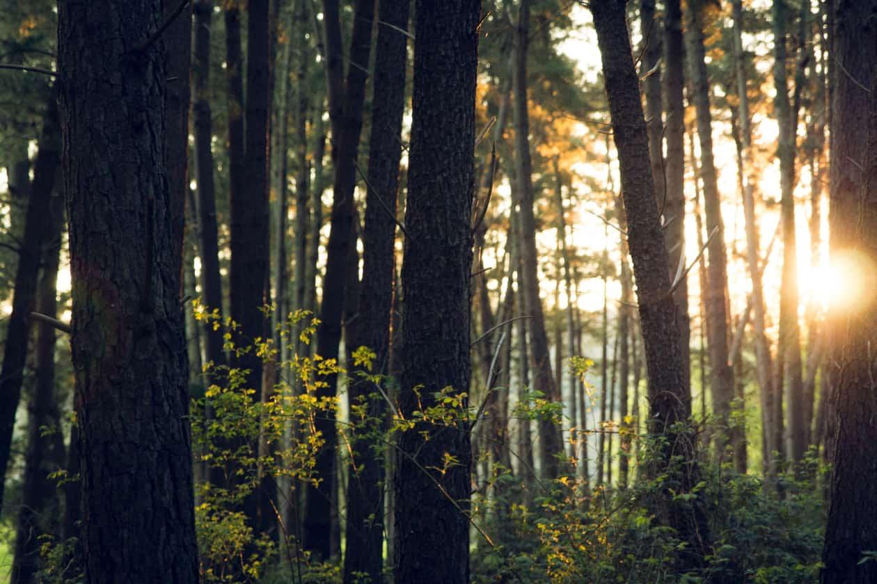 UNEPが世界環境デーのテーマを決定