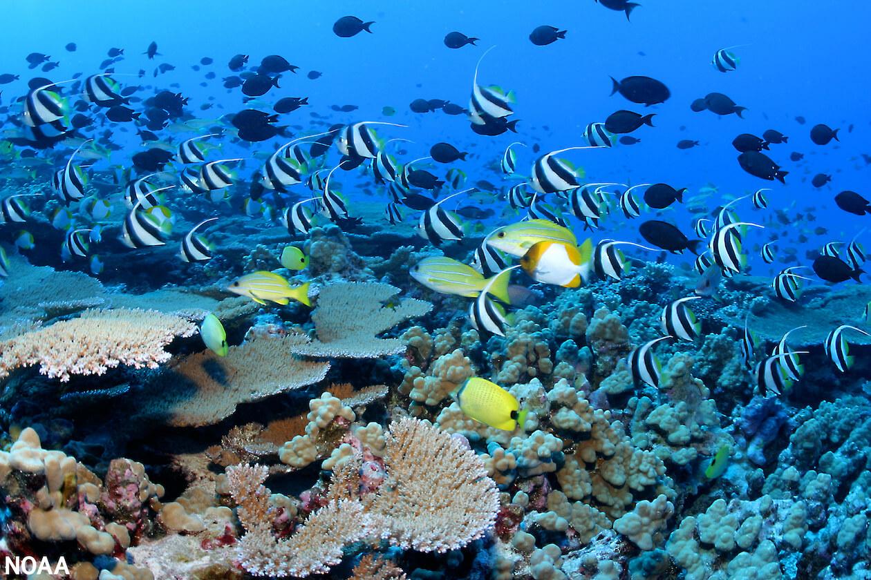 School of fish in Great Barrier Reef