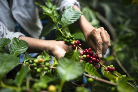 Support Fair Trade Organic Coffee!