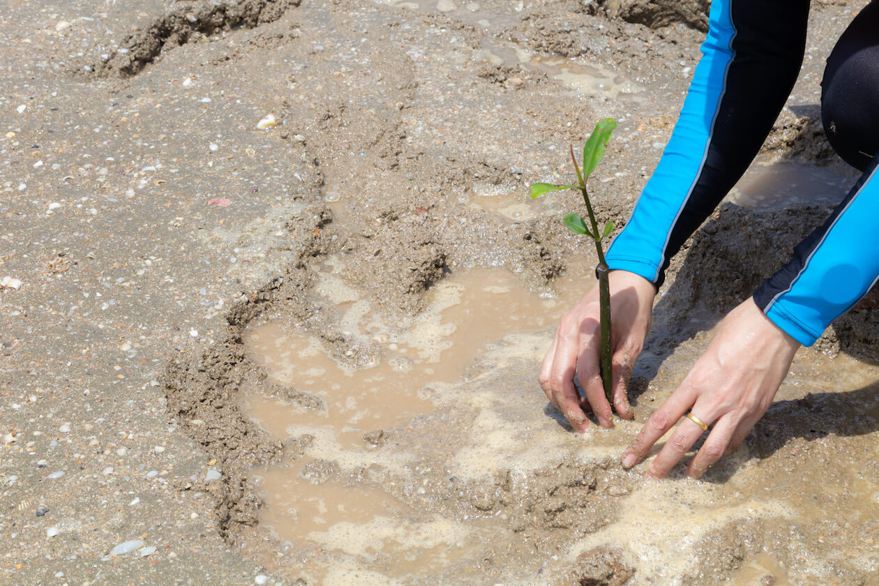 Planting a tree in the mangrove as part of the World Environment Day Action