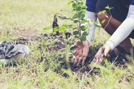 UN Decade of Ecosystem Restoration, plant a tree