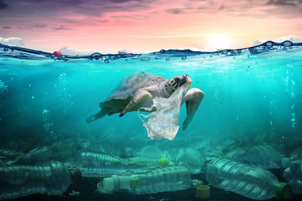 世界海洋デーにて、海洋の生物について知ってみよう