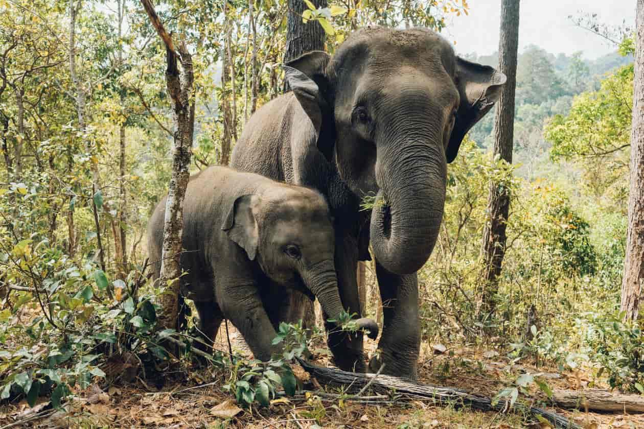 SDGsでも保護活動が進む絶滅危惧種