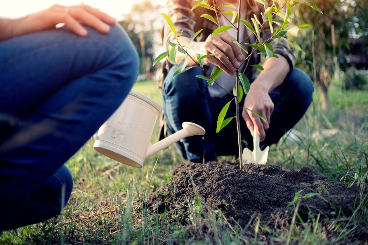 preventing heat waves planting trees