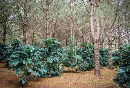 「アグロフォレストリー」とは?農業と林業を両立させる新しい生産方法