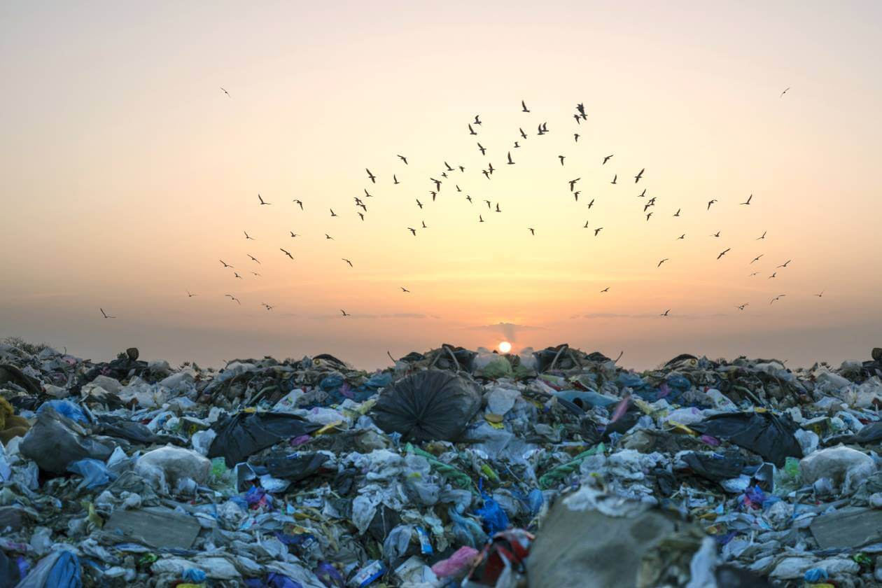 food waste and landfill