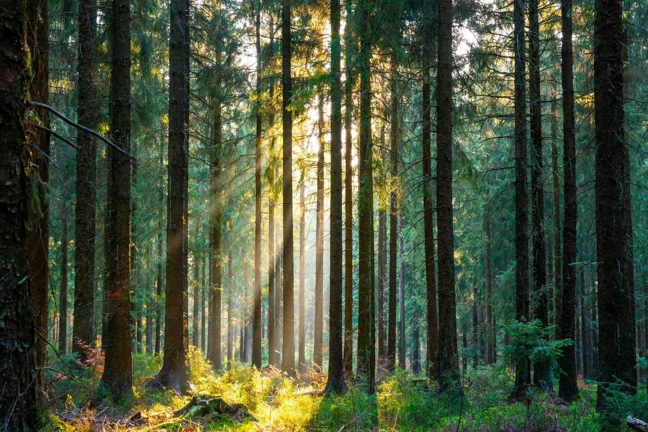forest nature sunlight