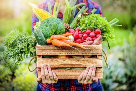 有機野菜の宅配サービスおすすめ5選 | 無農薬野菜も選べる