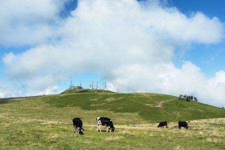 グラスフェッドとは?アニマルウェルフェアに寄り添う牧草飼育の考え方